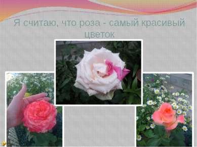 Я считаю, что роза - самый красивый цветок