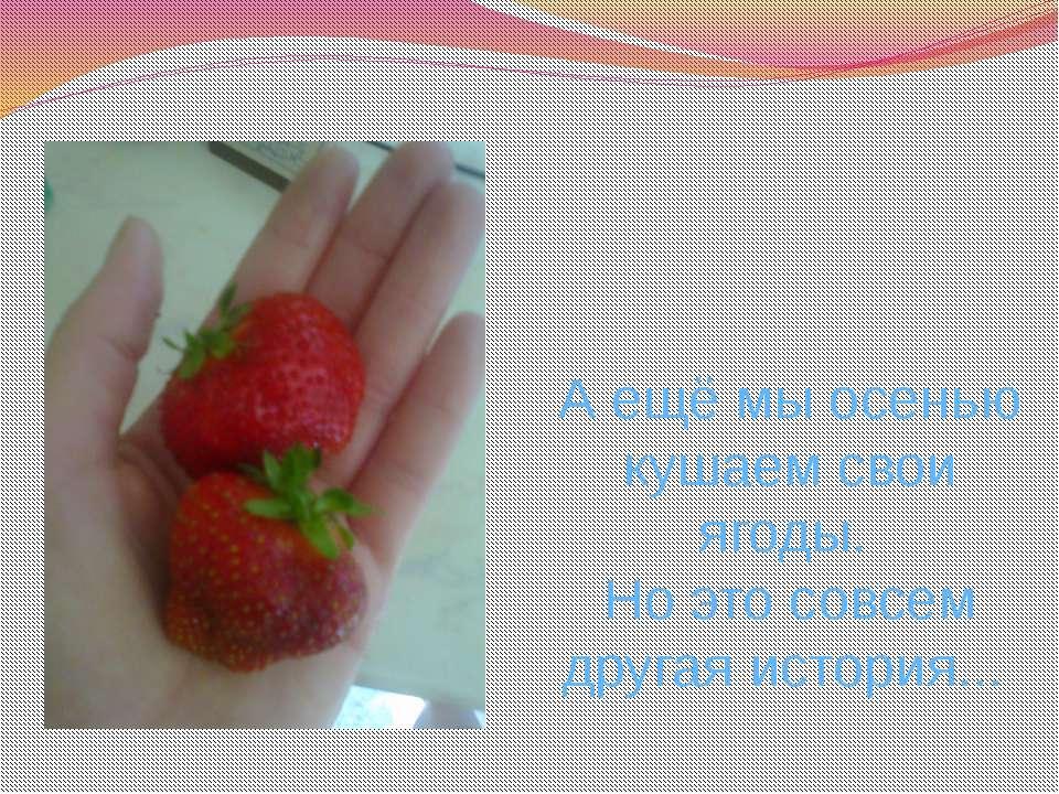 А ещё мы осенью кушаем свои ягоды. Но это совсем другая история...