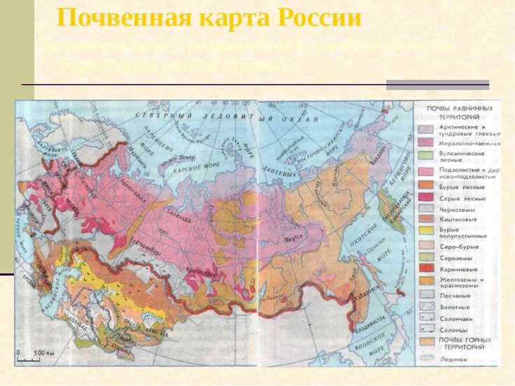 Почвенная карта России Познакомьтесь с размещением главных почв на территории...