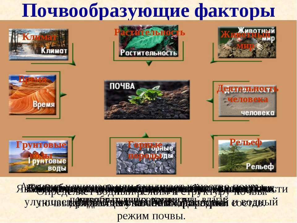 Почвообразующие факторы Вспомните какую роль играет в образовании почв каждый...