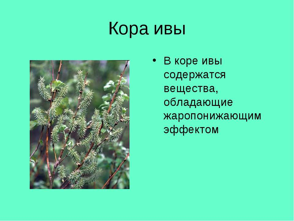 Кора ивы В коре ивы содержатся вещества, обладающие жаропонижающим эффектом