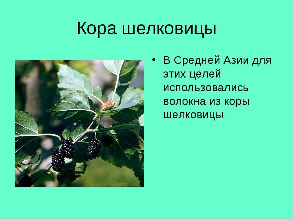 Кора шелковицы В Средней Азии для этих целей использовались волокна из коры ш...