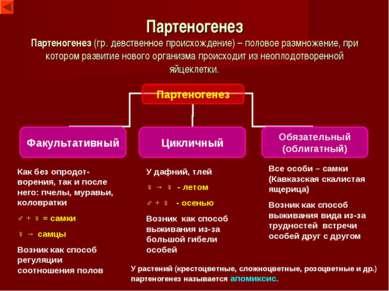 Партеногенез Партеногенез (гр. девственное происхождение) – половое размножен...