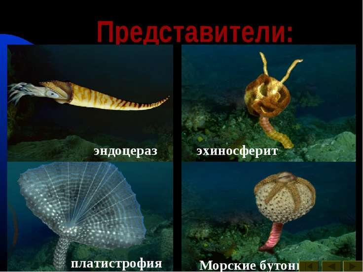 Представители: археокринус астраспис Брюхоногие моллюски гомилозои гониоцераз...