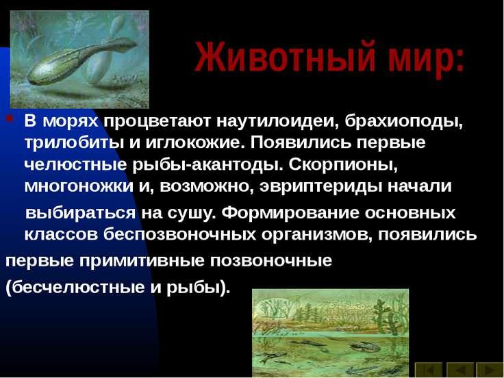 Животный мир: В морях процветают наутилоидеи, брахиоподы, трилобиты и иглокож...