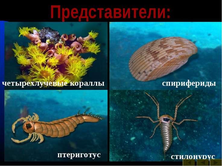Представители: акантоды арктинурус биркения дейфон морская лилия ортоцератида...