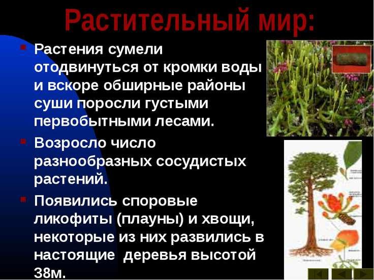 Растительный мир: Растения сумели отодвинуться от кромки воды и вскоре обширн...