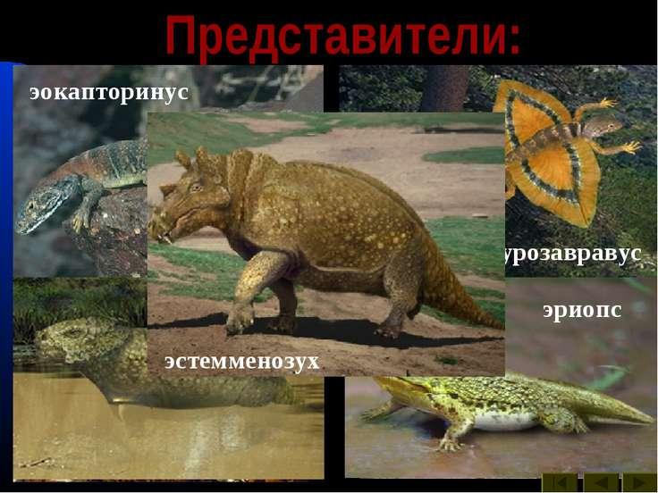 Представители: двиния двинозавр диметродон ивантозавр иностранцевия каккопс л...
