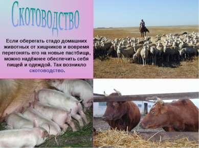 Если оберегать стадо домашних животных от хищников и вовремя перегонять его н...