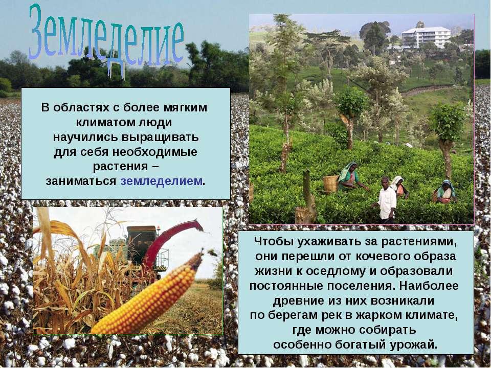 В областях с более мягким климатом люди научились выращивать для себя необход...