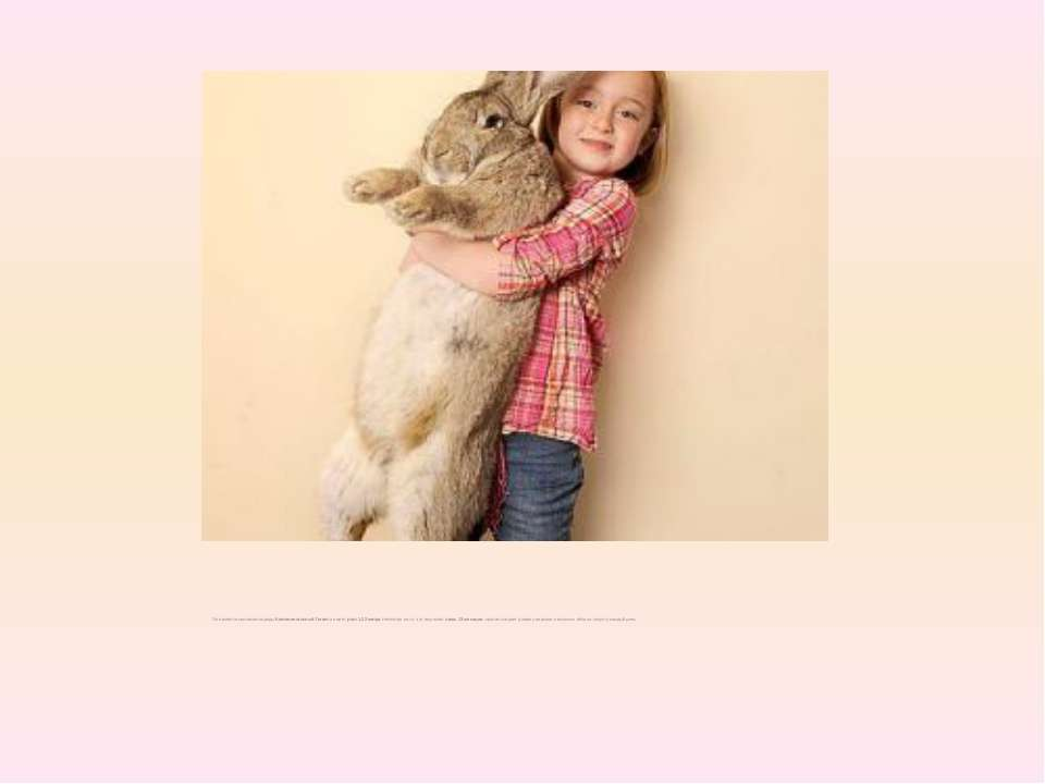 Он является кроликом породыКонтинентальный Гиганти имеетрост 1,22 метра. ...