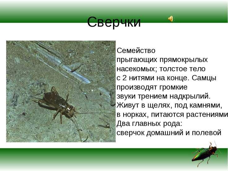 Сверчки Семейство прыгающих прямокрылых насекомых; толстое тело с 2 нитями на...