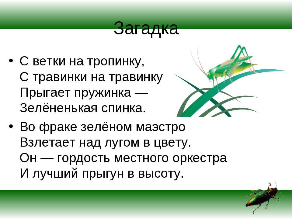 Загадка С ветки на тропинку, С травинки на травинку Прыгает пружинка — Зелёне...