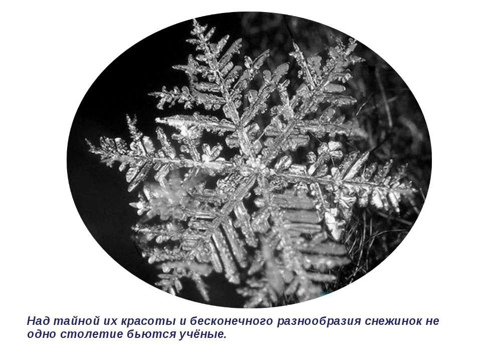 Над тайной их красоты и бесконечного разнообразия снежинок не одно столетие б...