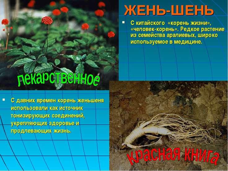 ЖЕНЬ-ШЕНЬ С давних времен корень женьшеня использовали как источник тонизирую...