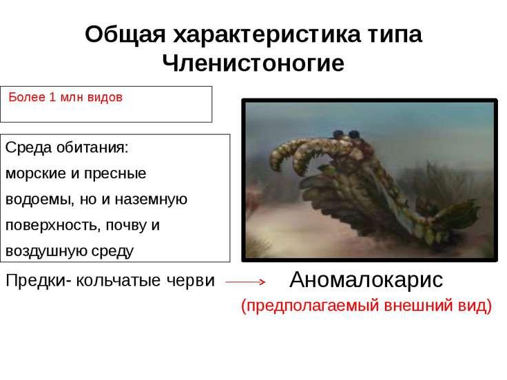 Общая характеристика типа Членистоногие Среда обитания: морские и пресные вод...