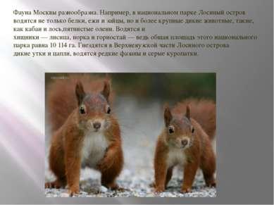 Фауна Москвы разнообразна. Например, в национальном паркеЛосиный остров водя...