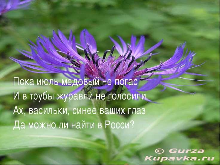 Пока июль медовый не погас И в трубы журавли не голосили, Ах, васильки, синее...