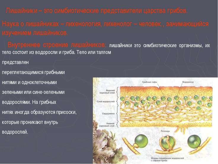 Лишайники – это симбиотические представители царства грибов. Наука о лишайник...