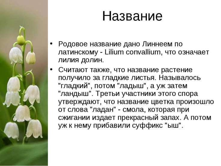 Название Родовое название дано Линнеем по латинскому - Lilium convallium, что...