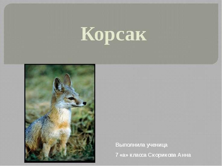 Корсак Выполнила ученица 7 «а» класса Скорикова Анна