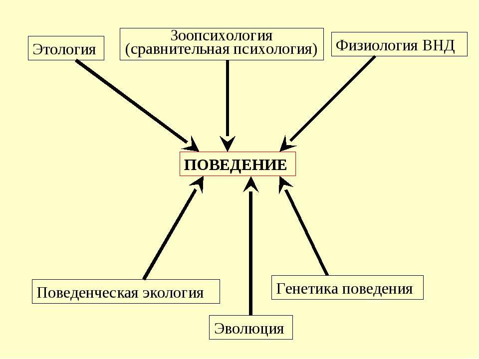 Этология Зоопсихология (сравнительная психология) Физиология ВНД Поведенческа...