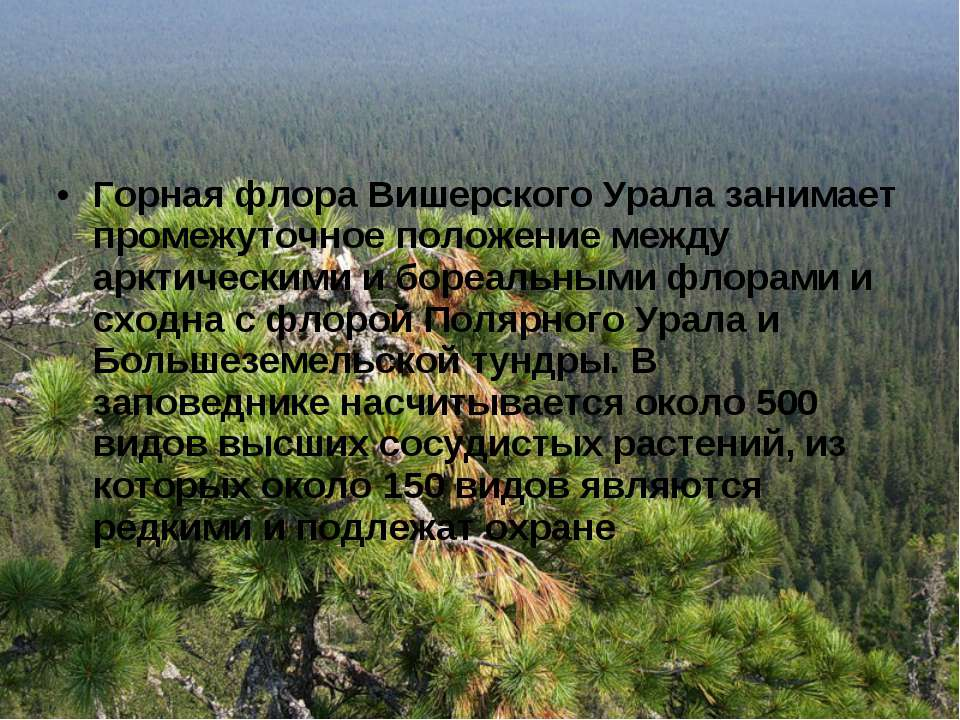 Горная флора Вишерского Урала занимает промежуточное положение между арктичес...