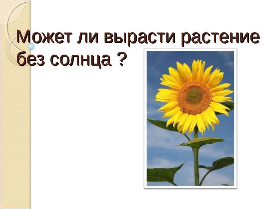 Может ли вырасти растение без солнца ?