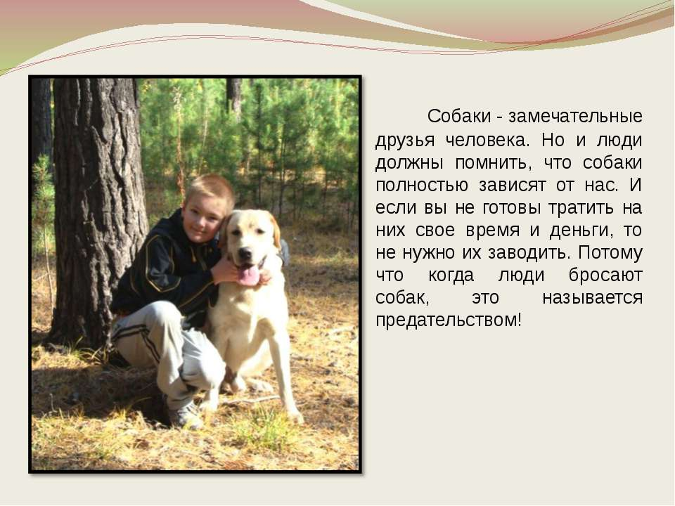 Собаки - замечательные друзья человека. Но и люди должны помнить, что собаки ...