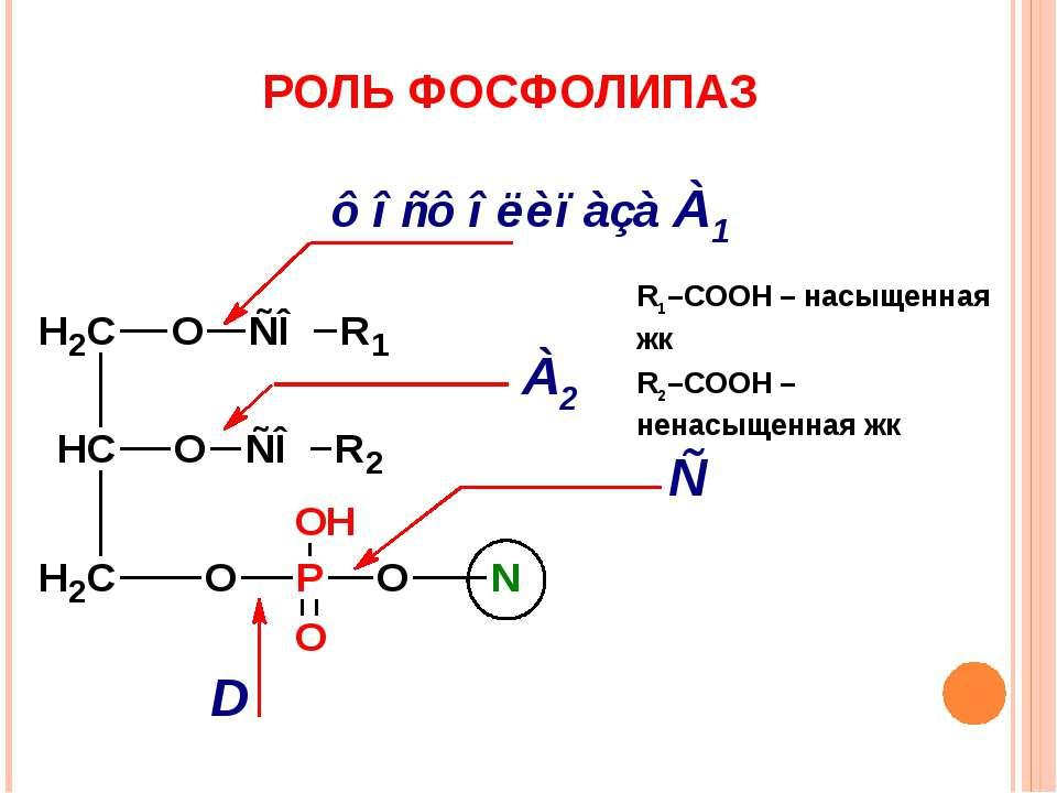 РОЛЬ ФОСФОЛИПАЗ R1–COOH – насыщенная жк R2–COOH – ненасыщенная жк