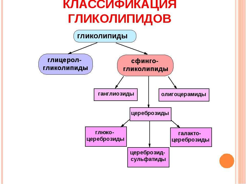 КЛАССИФИКАЦИЯ ГЛИКОЛИПИДОВ