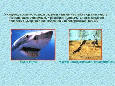 У хищников обычно хорошо развиты нервная система и органы чувств, позволяющие...