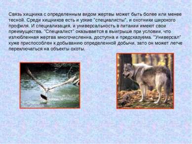 Связь хищника с определенным видом жертвы может быть более или менее тесной. ...