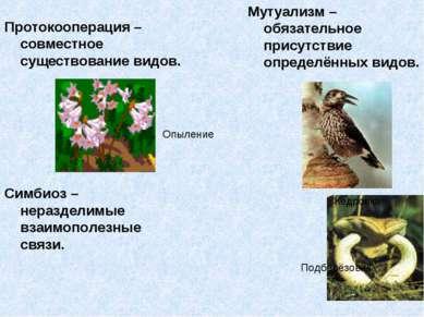 Протокооперация – совместное существование видов. Мутуализм – обязательное пр...