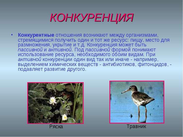 КОНКУРЕНЦИЯ Конкурентные отношения возникают между организмами, стремящимися ...