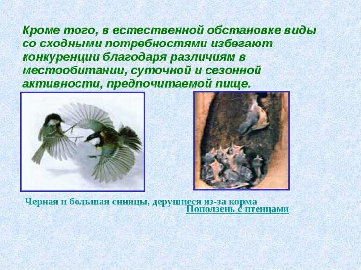 Кроме того, в естественной обстановке виды со сходными потребностями избегают...