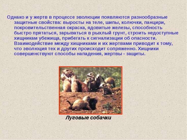 Луговые собачки Однако и у жертв в процессе эволюции появляются разнообразные...