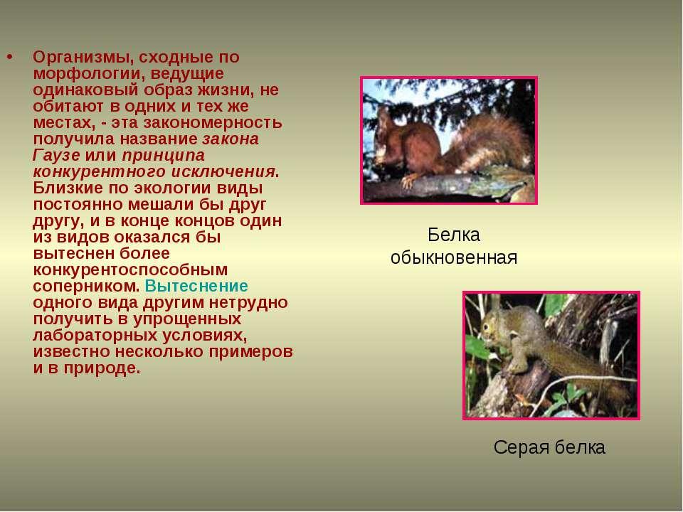 Организмы, сходные по морфологии, ведущие одинаковый образ жизни, не обитают ...