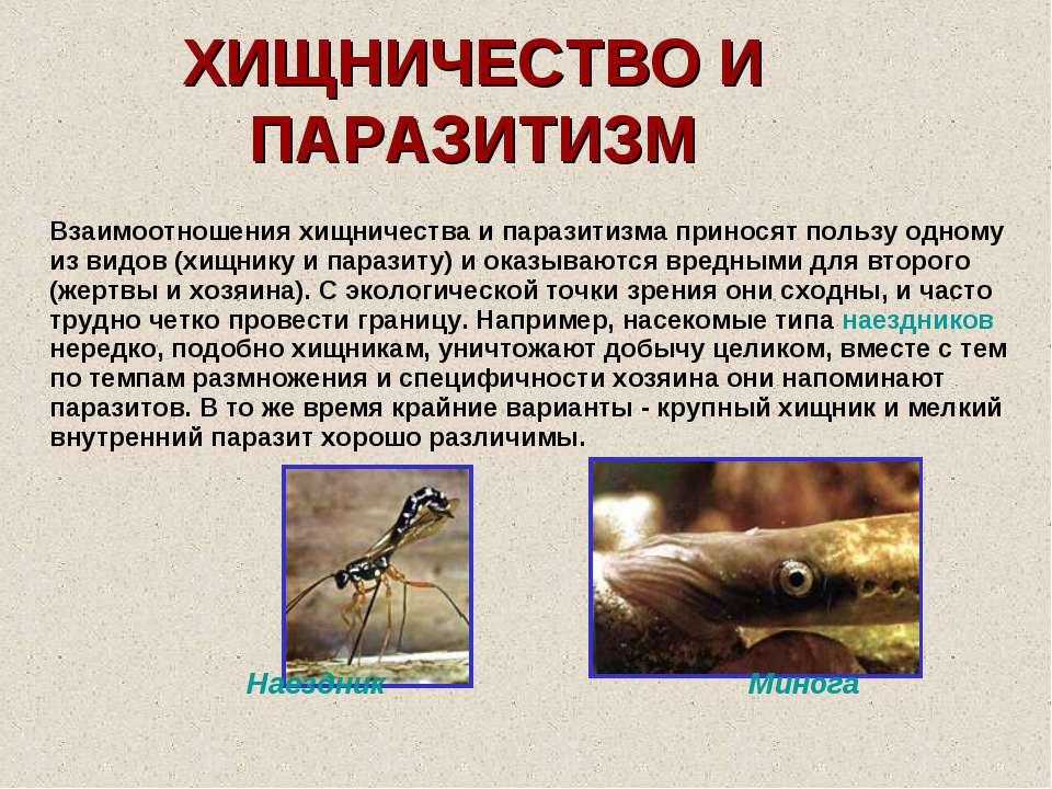 ХИЩНИЧЕСТВО И ПАРАЗИТИЗМ Взаимоотношения хищничества и паразитизма приносят п...