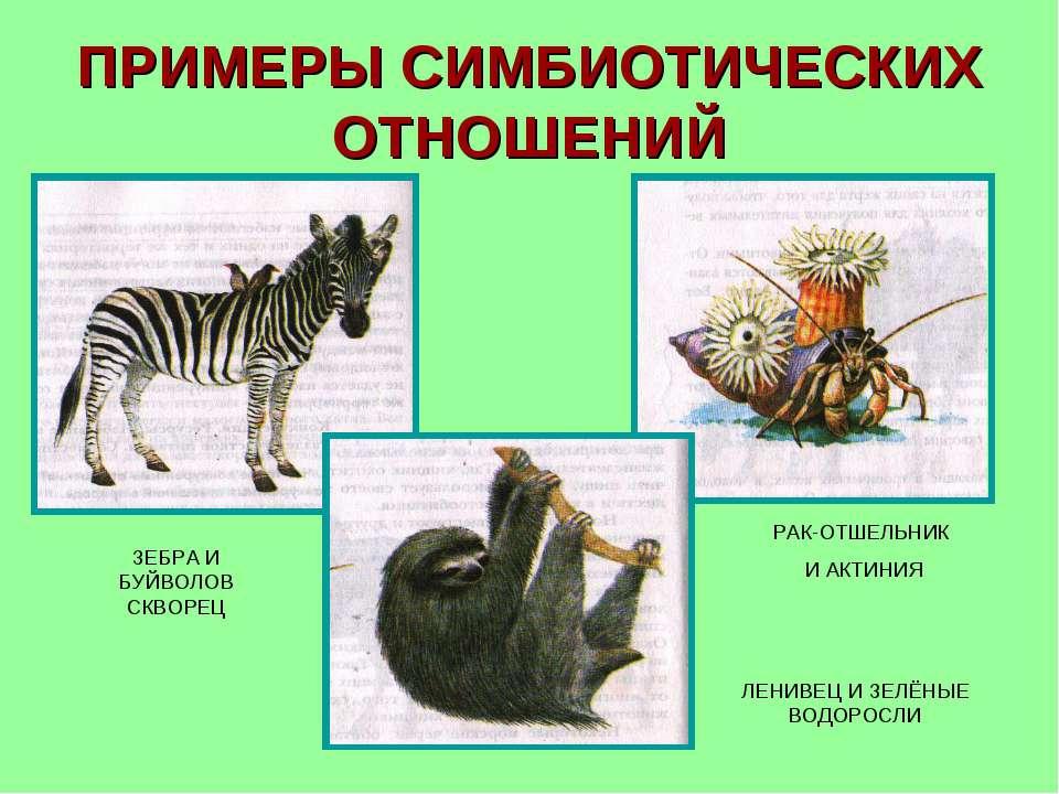 Отношения симбиоз примеры симбиоза