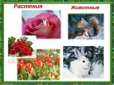 Растения Животные