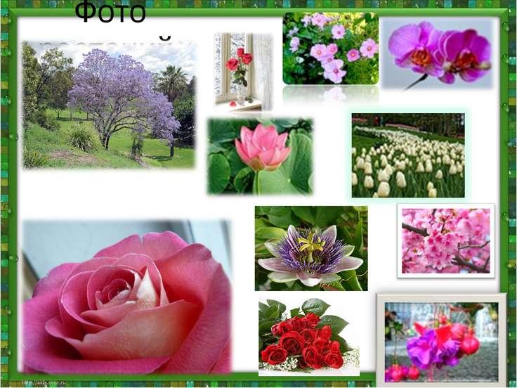 Фото растений.