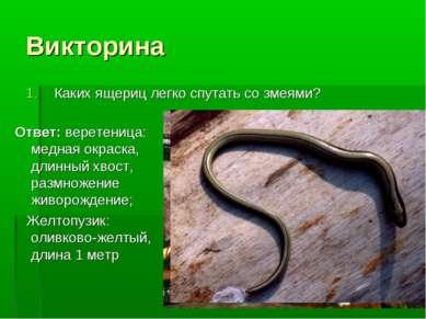 Викторина Каких ящериц легко спутать со змеями? Ответ: веретеница: медная окр...