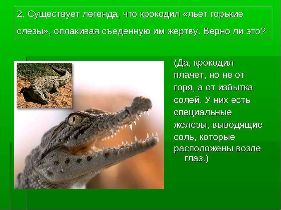 2. Существует легенда, что крокодил «льет горькие слезы», оплакивая съеденную...