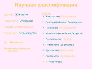 Классы Ямкохвостые (Caudofoveata) Бороздчатобрюхие (Solenogastres) Панцирные ...