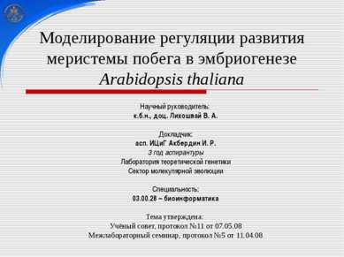 Моделирование регуляции развития меристемы побега в эмбриогенезе Arabidopsis ...