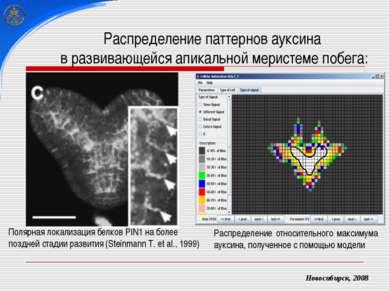 Распределение паттернов ауксина в развивающейся апикальной меристеме побега: ...