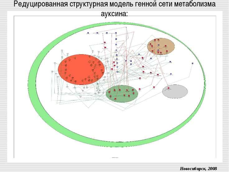 Редуцированная структурная модель генной сети метаболизма ауксина: Новосибирс...