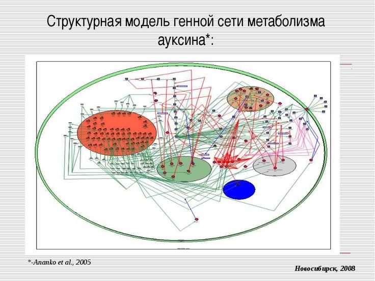 Структурная модель генной сети метаболизма ауксина*: Новосибирск, 2008 *-Anan...