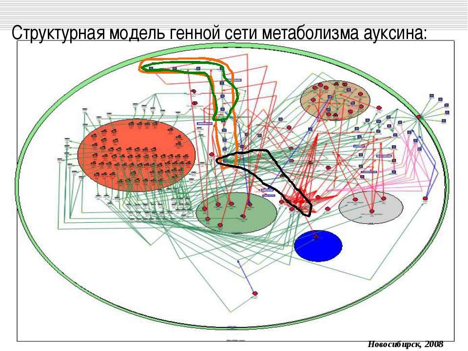 Структурная модель генной сети метаболизма ауксина: Новосибирск, 2008